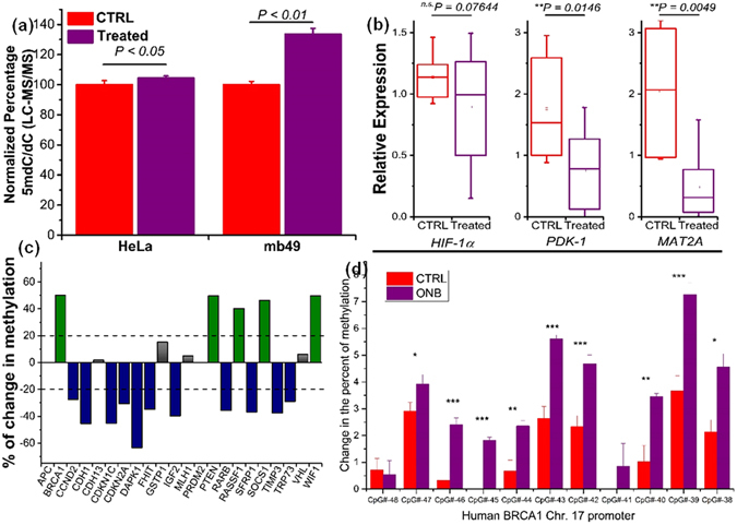 Quantitative real-time PCR, LC-MS, and gene-specific methylation analysis of in vivo tumors. ( a ) LC - MS/MS quantitation of 5mC levels in terms of ratios of 5-methyl-2′-deoxycytidine (5mdC) to that of deoxycytidine (dC) in nanobubble shell (CTRL) and oxygen nanobubble (Treatment) treated groups for HeLa (left) and MB49 (right) cells in mice models. ( b ) Transcription levels of HIF-1α, PDK-1, and MAT2A determined by qRT-PCR. (n = 16, p-value was calculated by ANOVA). ( c ) Changes in promoter methylation of the 22 selected tumor suppressor genes. ( d ) Oxygen nanobubble induced changes in DNA methylation at the CpG islands of Human BRCA1 promoter region. The extent of methylation was compared between in vivo tumors treated with either nanobubbles or saline. Methylation levels were measured by bisulfite treatment of the DNA followed by pyrosequencing and expressed as % change at the promoter region of chromosome 17. *** P