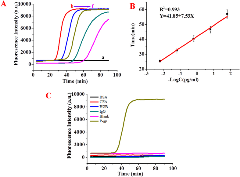 The real-time fluorescence curves of magnetic liposome-Im-LAMP assay reactions with different concentrations of P-gp:0 pg/ml (curve a), 160 pg/ml (curve b), 16 pg/ml (curve c), 1.6 pg/ml (curve d), 0.16 pg/ml (curve e), 1.6*10 −2 pg/ml (curve f). ( B ) The relationship between cycle time and log concentrations of P-gp. The results are average values of three repetitive measurements. ( C ) Specificity of magnetic liposome-Im-LAMP assay detection of P-gp: the real-time fluorescence curves of Im-LAMP reactions with different reference proteins, bovine serum albumin (BSA), carcinoembryonic antigen (CEA), hemoglobin (HGB), immunoglobulin G (IgG) and the blank. The Im-LAMP reactions were performed in a volume of 10 µL. <t>[FIP]</t> = [BIP] = 1.6 µM, [B3] = [F3] = 0.2 µM, [Bst <t>DNA</t> polymerase] = 8 U/µL.