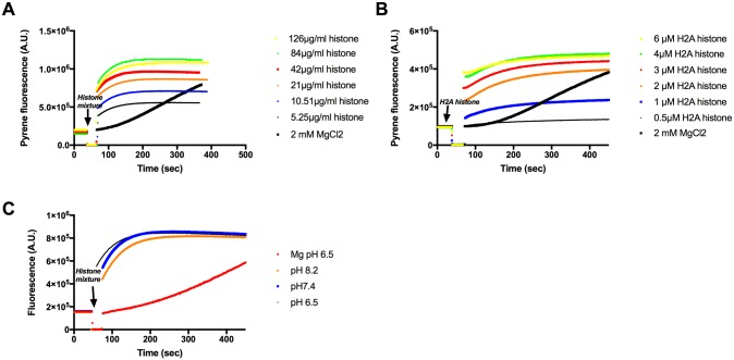 Polymerization of CaATP-G-actin by histone mixture and H2A histone followed by increase in pyrene fluorescence. (A) 5.25–126 μg/ml histone mixture, (B) 0.5–6 μM (7–84 μg/ml) H2A histone, or 2 mM MgCl 2 were added to pyrene labeled (10% labeling ratio) 4 μM CaATP-G-actin in pH 7.4 CaATP-G-buffer. (C), 21 μg/ml histone mixture was added to pyrene labeled (10% labeling ratio) 4 μM CaATP-G-actin in pH 6.5, 7.4 and 8.2 CaATP-G-buffer or 2 mM MgCl 2 was added in pH 6.5 CaATP-G-buffer. Fluorescence measurements were carried out as given in MATERIALS and METHODS. Presented data are representative of three independent experiments.