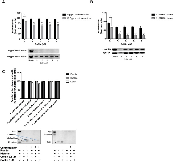 Effect of cofilin on the sedimentation of 4 μM MgF-actin bundled by histone mixture or H2A histone. (A), 2–8 μM cofilin added to 4 μM F-actin bundled by 10.5 and 63 μg/ml histone mixture or (B) by 1 μM (14 μg/ml) and 3 μM (42 μg/ml) H2A histone. (C), 42 μg/ml histone mixture or 4 μM (56 μg/ml) H2A histone and 2.5 or 5 μM cofilin were added simultaneously to 4 μM F-actin. Samples were centrifuged at 20800xg for 8 min, supernatants run on SDS-PAGE and evaluated as described in MATERIALS and METHODS. The presented data are mean and standard deviation of three independent experiments. Insets: lanes of SDS-PAGE gels, representatives of three independent experiments, obtained from SDS-PAGE of low speed centrifugation supernatants.