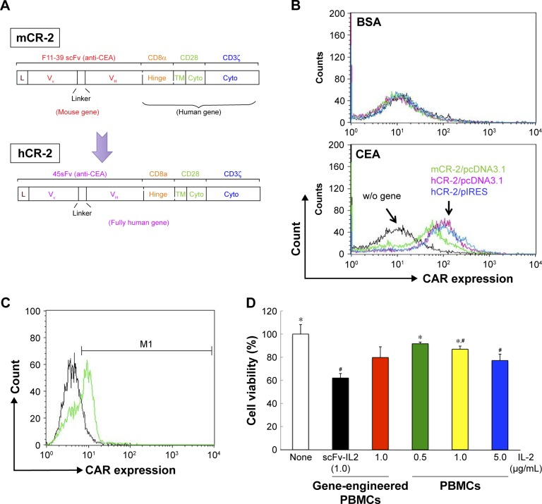 Combination of <t>CAR-bearing</t> <t>PBMCs</t> and scFv-IL2 enhances the antitumor effect on MKN-45 cells. Notes: ( A ) Exchange of the mouse scFv gene for its human equivalent in the CAR gene construct. The mouse scFv of mCR-2, which was the most effective among 4 CAR constructs, was exchanged for the 45κHscFv, a human scFv antibody, and this fully human CAR gene was designated hCR-2. ( B ) Expression of hCR-2 inserted into different expression vectors, pcDNA3.1(−) or pIRES, in Jurkat cells was detected by flow cytometry using APC-BSA and APC-CEA. Although hCR-2 was expressed at slightly higher levels in Jurkat cells than mCR-2, no other difference could be detected between the 2 expression vectors. ( C ) hCR-2 in PBMCs was detected by flow cytometry, by using EGFP expression. Approximately 60% of PBMCs expressed hCR-2 after transfection of the CAR gene within a pIRES vector using NEPA21. ( D ) PBMCs expressing hCR-2 in combination with scFv-IL2 demonstrated a higher antitumor activity on MKN-45 cells than those expressing IL-2 or PBMCs alone. Cell viability was determined by measuring the light products using a luciferase assay system. Data represent the mean ± standard error of the mean from at least 3 independent experiments. * P