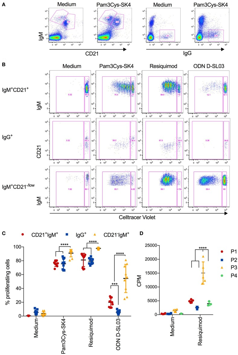 Proliferative responses of B cell subsets after stimulation with toll-like receptor (TLR) ligands (A) Gating strategy defining CD21 + IgM + , CD21 + IgM + , and IgG + B cells, exemplified for unstimulated and Pam3Cys-SK4 stimulated peripheral blood mononuclear cells (PBMCs) after 5 days of culture. (B) CellTrace Violet staining of the three B-cell subsets defined in (A) using multicolor flow cytometry. PBMCs were cultured for 5d. A representative animal out of three is shown. (C) Percentage of proliferating B cell subsets, defined as shown in (A,B) , after stimulation of PBMCs with the indicated TLR ligands. Triplicates cultures from three different animals are shown. (D) Proliferation of FACS-sorted B cell subsets after stimulation for 3 days was determined using 3 H-thymidine incorporation. P1 was defined and sorted as CD21 + IgM + subset, P2 as IgG + subset, P3 as CD21 − IgM + CD11R1 + subset, and P4 as CD21 − IgM + CD11R1 − subset (for gate definition see Figure 2 ). (C,D) Mean values are indicated by horizontal bars. Error bars show SDs. Statistical significance was calculated using ANOVA followed by Tukey's test.