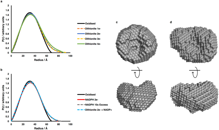 Structural information from SANS data on the different redox states of CPR. ( a , b ) Pairwise distance distribution functions; ( a) samples reduced with dithionite; ( b ) samples reduced with NADPH. The longer 'tail' on the distribution functions for the reduced states as compared to the oxidised state demonstrates a more extended average conformation. ( c , d ) ab initio envelopes calculated using DAMMIF from the scattering curves of ( c ) oxidised CPR and ( d ) CPR reduced to the 2e − level with dithionite; in ( c and d ) the lower envelopes have been rotated 90° about the horizontal axis.
