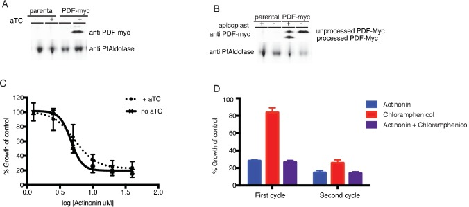 Actinonin is unlikely to inhibit the peptide deformylase of P. falciparum . ( A ) Western blot of the parental line (NF54attB-pCRISPR) and the <t>PDF-myc</t> parasites grown with our without aTC for 24 hr. Induction of the second copy of PfPDF (PDF-myc) with 4 uM aTC results in two bands, the top lighter band representing unprocessed PDF-myc, and the bottom darker band representing processed PDF-myc. PfAldolase is used as a loading control. Induction with 0.125–4 uM aTC results in similar amount of PDF-myc induction (data not shown). ( B ) Western blot for PDF-myc of parasites with or without their apicoplast. An accumulation of unprocessed PDF-myc is observed when the apicoplast is missing, due to loss of the transit peptide cleavage that usually occurs upon import to the apicoplast. This has been shown previously for apicoplast-resident proteins and is consistent apicoplast localization ( Yeh and DeRisi, 2011 ). ( C ) Dose dependent parasites growth inhibition by actinonin in the presence of 4 uM aTC does not change the actinonin EC 50 . This experiment was also performed under IPP rescue conditions, to confirm apicoplast specificity of actinonin and with a range of aTC concentrations (0.125–4 uM) to insure max expression of PDF-myc (data not shown). Error bars represent the SEM of 3 biological replicates. ( D ) Parasite growth after one or two replication cycles after treatment with actinonin, chloramphenicol, or both actinonin and chloramphenicol normalized to growth of an untreated control. Treatment with actinonin alone inhibited growth after the first replication cycle, whereas treatment with chloramphenicol alone inhibited growth after the second replication cycle. Co-treatment with chloramphenicol, which targets apicoplast translation, did not suppress effects of actinonin treatment, which was inconsistent with actinonin targeting the peptide deformylase (PDF) of the apicoplast. This experiment was tried using a range of concentrations of actinonin and chlo