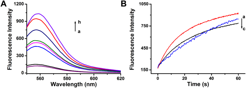 ( A ) Time-dependent fluorescence spectra changes upon subjecting the Exo III activation module to only invading strand I 1 (a) and I 1 and variable concentrations of Exo III: (b) 0, (c) 1, (d) 2, (e) 3, (f) 5, (g) 10 units, and (h) only strand F 1 , [F 1 ] = [Q 1 ] = [I 1 ] = 50 nM. ( B ) Real-time fluorescence changes upon treatment of the Exo III inhibition module with I 2 and variable concentrations of Exo III: (a) 0, (b) 5, and (c) 10 units, [F 1 ] = [Q 2 ] = [I 2 ] = 50 nM.