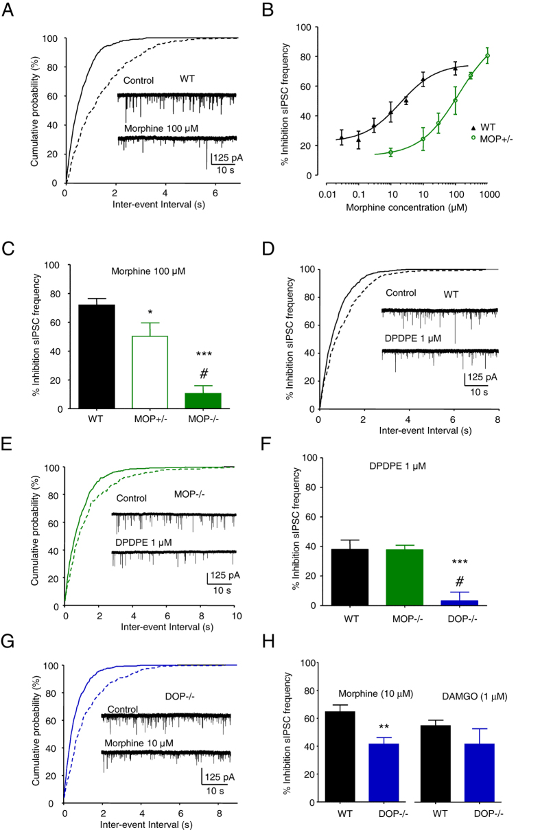 Morphine inhibits IPSCs through activation of MOPs and DOPs. ( A ) Exemplar recording of the inhibition of sIPSC frequency by morphine (100 μM) in a VTA neuron, with the associated graph of cumulative probability of the inter-event intervals. ( B ) Graph of the concentration-dependent inhibition of sIPSC frequency by morphine in WT neurons (EC 50 = 2 µM (95% CIs = 0.54 and 7.2 µM), slope = 0.8, n = 5–10) and MOP+/− neurons (EC 50 = 128 µM, (95% CIs = 20 and 826 µM), slope = 0.7, n = 4–8). ( C ) Bar graph of the average inhibition by morphine (100 μM) of sIPSC frequency in WT (72 ± 5%, n = 7), MOP+/− (50 ± 9%, n = 4) and MOP−/− (11 ± 5%, n = 7) neurons. ( D ) Exemplar sIPSCs recorded from a WT neuron in the absence and presence of <t>DPDPE</t> (1 µM), with the associated graph of cumulative probabilities. ( E ) Exemplar recording from a MOP−/− neuron in the absence and presence of DPDPE, with the graph of cumulative probability. ( F ) Bar graph illustrating the average inhibition by DPDPE of sIPSC frequency in WT (37 ± 7%, n = 6), MOP−/− (34 ± 2%. n = 5) and DOP−/− neurons (7 ± 5%, n = 6). ( G ) sIPSCs recorded from a DOP−/− VTA neuron, illustrating the remaining inhibition by morphine, with the associated graph of cumulative probability. ( H ) Bar graph of inhibition of sIPSC frequency by morphine and <t>DAMGO.</t> Inhibition by morphine was reduced in DOP−/− neurons (42 ± 5%, n = 8) compared to WT neurons (64 ± 5, n = 10; unpaired t test p = 0.004; see Table 1 ). While Inhibition by DAMGO (42 ± 11%, n = 8) was not significantly different (unpaired t test p = 0.31, WT n = 7, DOP−/− n = 7) to WT (55 ± 4%, n = 7). Vertical lines represent ± SEM. One way ANOVA p