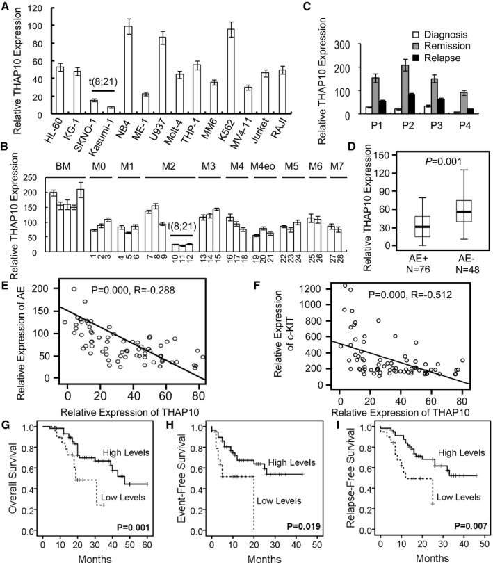 THAP10 is down‐regulated in t(8;21) AML and correlates with adverse clinical outcome Relative qRT–PCR quantification of THAP10 mRNA levels in the indicated leukaemia cell lines (A) and mononuclear cells (MNC) isolated from leukaemia patients (B) ( n = 28). Sequential analyses of THAP10 mRNA levels in mononuclear cells isolated from bone marrow samples of four individual leukaemia patients at different stages of disease, including newly diagnosed, remission and relapse. Comparison of THAP10 mRNA levels in two categories of AML M2 subtype patients (total n = 124): AML1‐ETO + ( n = 76) and AML1‐ETO − ( n = 48) t(8;21) AML, P = 0.001. Data are represented as a boxplot, which shows the median value of mRNA levels (line in the middle of the box), the first and the third quartiles (lower and upper limits of each box, respectively). Wiskers display the highest and lowest data values. Correlations in gene expression between THAP10 and AML1‐ETO ( R = −0.288, P = 0.000, E) or c‐KIT ( R = −0.512, P = 0.000, F), the two‐sided paired Pearson test was used for the significance of association. Correlations of THAP10 expression (high, n = 56; low, n = 20) with overall survival ( P = 0.001, G), event‐free survival ( P = 0.046, H) and relapse‐free survival ( P = 0.039, I). The cut‐off value (dash line) is 2 × 10 1 of THAP10 level, by which high vs. low THAP10 mRNA expression is defined, the log‐rank test was used for the survival analysis. Data information: Data are expressed as the mean ± SEM. Source data are available online for this figure.
