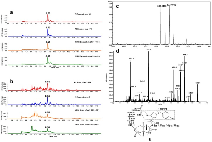 ( a ) Mass spectrometric profiles obtained from a four-channel scanning system analysis of mouse liver microsomal incubations containing DIOB, NADPH, Cys, and BBA; ( b ) Mass spectrometric profiles obtained from the four-channel scanning system analysis of mouse liver microsomal incubations containing DIOB, NADPH, and BBA, followed by exhaustive proteolytic digestion; ( c ) High resolution mass spectrum; ( d ) MS/MS spectrum of pyrrole 6 .
