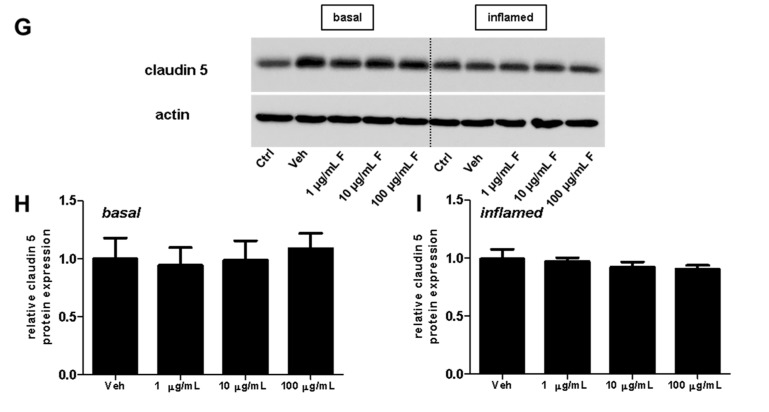 Effect of fullerenols on the amount of junctional proteins in mouse brain microvascular endothelial cell (MBMEC) cultures under basal and inflammatory conditions. Western blot analysis and densitometric quantification (normalized to basal or inflamed untreated control cell cultures) of the amount of occludin ( A – C ), claudin 3 ( D – F ) and claudin 5 ( G – I ) proteins in MBMEC after exposure to interferon-γ and tumor necrosis factor-α (I + T; 100 IU each) and treatment with fullerenol (F; 1, 10 and 100 µg/mL; n = 4–5) for 18 h ( C , F , I ) compared to cultures under basal (homeostatic milieu) conditions ( B , E , H ). β-Actin was used as loading control. Ctrl, untreated control; Veh, vehicle treatment. * p