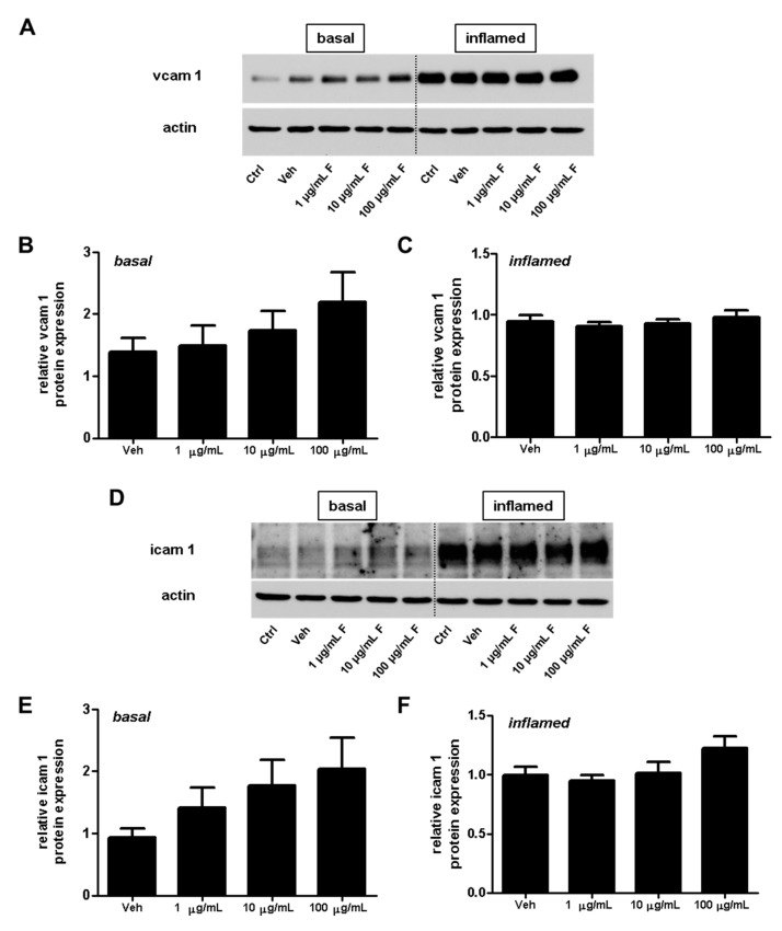 Effect of fullerenols on the amount of adhesion molecules in mouse brain microvascular endothelial cell (MBMEC) cultures under basal and inflammatory conditions. Western blot analysis and densitometric quantification (normalized to basal or inflamed untreated control cell cultures) of the amount of VCAM-1 ( A – C ) and ICAM-1 ( D – F ) proteins in MBMECs after exposure to interferon-γ and tumor necrosis factor-α (I + T; 100 IU each) ( C , F ), and treatment with fullerenol (F; 1, 10 and 100 µg/mL; n = 6) for 18 h compared to cultures under basal (homeostatic milieu) conditions ( B , E ). β-Actin was used as loading control. Ctrl, untreated control; Veh, vehicle treatment.