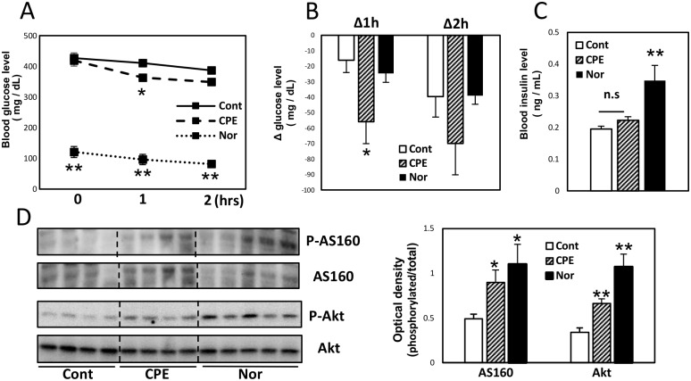 Oral administration of CPE decreased blood glucose level in STZ-induced diabetic mice. ICR mice were injected intraperitoneally with a single dose of STZ (200 mg/kg) and randomly divided into 2 groups, a control group (Cont) and a CPE administration group (CPE). Mice injected with an equal volume of saline were maintained as normal groups (Nor). Blood glucose levels at 1 and 2 h after oral administration of CPE (1 g/kg) to STZ-induced diabetic mice (A), and the change from before administration (B). Blood insulin concentrations (C) and phosphorylation level of AS160 and Akt in the skeletal muscles (D) at 1 h after administration. Data are expressed as the mean ± SEM ( n = 5–9) * p