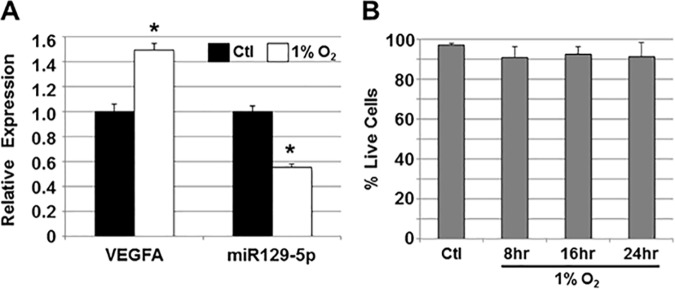 miR129-5p expression in hESC-derived cardiomyocytes with hypoxia. A) hESC-derived cardiomyocytes were cultured in 1% O 2 and relative expression of vascular endothelial growth factor A (VEGFA) and miR129-5p were assessed by qPCR. Upregulation of hypoxia-mediated VEGFA and downregulation of miR129-5p was seen. Data shown are mean±SEM (n = 3); *p