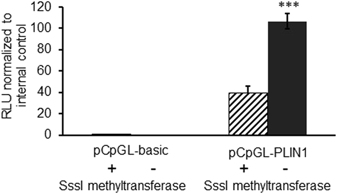 PLIN1 promoter methylation inhibits promoter activity. PLIN1 promoter activity is decreased after (hatched bar) versus without (black bar) DNA methylation by SssI methyltransferase. hMSCs were transfected with methylated and unmethylated pCpGL- PLIN1 plasmid. As negative control, cells were transfected with empty vector, pCpGL-basic. Each sample was prepared in quadruplicates and the experiment was repeated three times. Y axis is the ratio between firefly and renilla luciferase. Renilla luciferase is expressed from a second plasmid as an internal control. RLU = Relative luciferase units. *** P