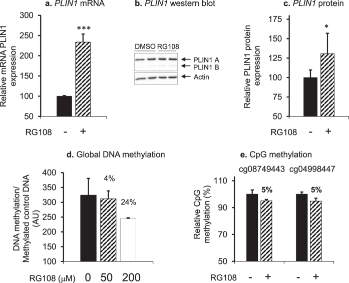 Global demethylation affects Perilipin levels in adipocytes. ( a ) PLIN1 mRNA as determined by RT-qPCR and ( b,c ) Perilipin protein as determined by Western blot were increased after treating hMSCs with DNA methyltransferase inhibitor RG108 (50 µM) (hatched bars) as compared to vehicle (black bars). The experiment was repeated three times. Representative Western blots are shown. These blot pictures were cropped and the full-length blot pictures are presented in Supplementary Fig. S1 . Results are presented as relative fold change ± SD vs. vehicle-treated cells. ( d ) Global DNA methylation in adipocytes was decreased after 24 h treatment with DNA methyltransferase inhibitor RG108 at a concentration of 50 µM (hatched bar) or 200 µM (white bar) compared to non-treated control cells (black bar). The experiment was repeated twice. ( e ) The methyltransferase inhibitor RG108 decreased methylation of specific CpG-sites in the PLIN1 promoter in adipocytes. Methylation of cg08749443 and cg04998447 was determined by Pyrosequencing after adipocytes were treated with 50 µM RG108 (hatched bar) compared to non-treated control cells (black bar). The analysis was repeated twice, n > 3. *** P