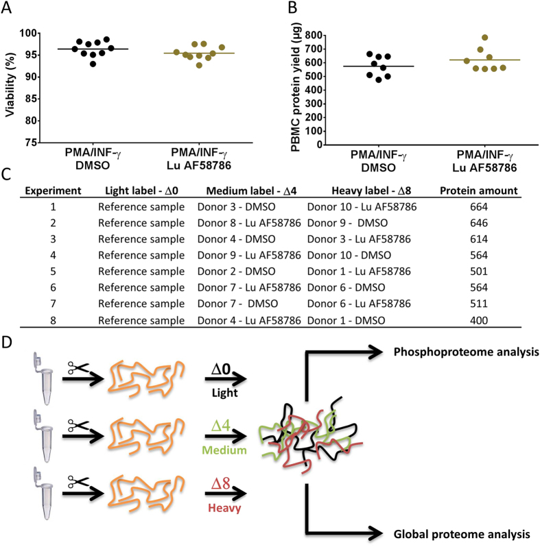Proteomic and phosphoproteomic study to identify LRRK2 kinase activity-dependent substrates in immune-stimulated human PBMCs. ( A ) % viability after 3 DIV of human immune-stimulated PBMCs treated for 24 hrs with or without 100 nM Lu AF58786 (n = 10 donors; 2 conditions). ( B ) PBMC total protein yield (µg) after 3 DIV of human immune-stimulated PBMCs treated for 24 hrs with or without 100 nM Lu AF58786 (n = 10 donors; 2 conditions). ( C ) Experimental set-up with information on mTRAQ labelling and pairing of samples as well as amount of protein used. ( D ) Experimental flow chart of the proteomic studies. Data was analyzed by either one-way ANOVA with Dunnett's multiple comparisons test or unpaired t-test. Data is presented as means ± SEM. PMA, phorbol 12-myristate 13-acetate; INF-γ, interferon-γ; DMSO, dimethyl sulfoxide.