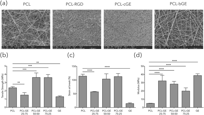 Properties of PCL and composite nanofiber mats. Top : SEM images of nanofibers. PCL 10% in CHCl 3 :MeOH (3:1), PCL immobilized with RGD (PCL-RGD), PCL-bGE (50:50) in TFE, PCL coated with gelatin (PCL-cGE). Bottom : Mechanical properties of PCL based nanofibrous scaffolds. ( a ) Tensile strength. ( b ) Strain at break ( c ) Young's modulus. Data is presented as mean ± SEM for n = 3 for each group. **** represents p = 0.0001, *** represents p