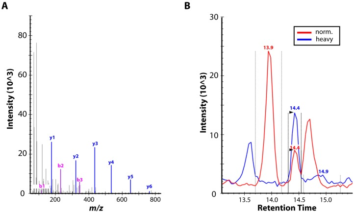 Mass spectrometric (MS) proteomic analysis. ( A ) Representative MS/MS spectrum of variola virus-specific peptide (NDDVLFR) from sample V1588. The spectrum depicts the intensity ( y -axis) of analyzed mass-to-charge ratios of identified peptide fragments ( x -axis). Based on this spectrum, fragments y4, y5 and y6 were involved in the Selected Reaction Monitoring (SRM) technique. ( B ) Selected Reaction Monitoring chromatogram of peptide (NDDVLFR) of sample V563. The peptide digest (in red) was analyzed with spiked synthetic, heavy-labeled counterpart (in blue). The presence of both peaks at a retention time of 14.4 min (based on prior heavy peptide analysis) together with the consistency of intensities of the ion pairs is an unambiguous evidence of the presence of peptide (NDDVLFR).