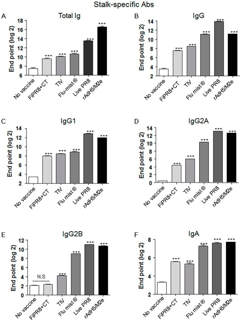 Adenovirus-vectored influenza vaccine induces a balanced Th1/Th2 antibody response against the HA stalk. Balb/c mice were intranasallyimmunized with formaldehyde-inactivated PR8+CT (FiPR8+CT), live PR8 (H1N1), TIV, FluMist ® , rAdH5/M2e. The levels of serum hemagglutinin (HA) stalk-specific total immunoglobulin (Ig), IgG, IgG1, IgG2A, IgG2B, and IgA Abs were measured 28 days post-immunization by ELISA with baculovirus-expressed cH9/1 protein ( A – F ). The values represent the mean ± SEM (vertical bars) end point ELISA Ab titers determined from five mice per group (*** p