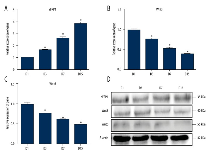 IL-17A blocked the Wnt signaling pathway in BMSCs; ( A–C ) The Wnt signaling pathway inhibitor (sFRP1) and modulators of Wnt signaling pathway (Wnt3, Wnt6) were detected by qRT-PCR method; ( D ) The Wnt signaling pathway inhibitor (sFRP1) and modulators of Wnt signaling pathway (Wnt3, Wnt6) were detected by Western blotting; D1 – 1 day; D3 – 3 days; D7 – 7 days; D15 – 15 days; *: P value