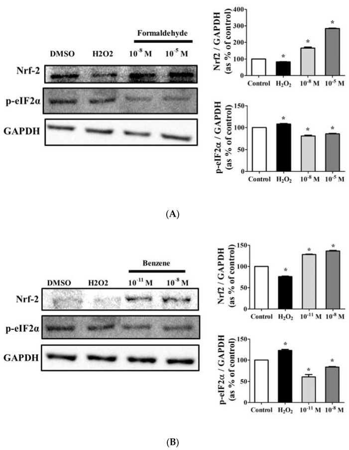 Effect of FA and Bz on protein expression of antioxidant factor nuclear factor erythroid 2 (NFE2)-related factor 2 (Nrf2) and endoplasmic reticulum (ER) stress marker eIF2α in JEG-3. JEG-3 cells were seeded in 100 mm dishes and treated with medium containing 0.1% DMSO (control), ( A ) FA (10 −11 M and 10 −8 M), or ( B ) Bz (10 −8 M and 10 −5 M) for 72 h. After protein extraction, Western blot was conducted to confirm the protein expression of the antioxidant factor, Nrf2, the ER stress marker, eIF2α, and the housekeeping gene, GAPDH. Quantification of Nrf2 and eIF2α protein was conducted by measuring band densities using a CS analyzer 4 (ATTO, Corp., Japan), and their protein levels were then normalized by the band value of GAPDH. Values shown are the means ± SD. * mean values were significantly different from 0.1% DMSO (control), p
