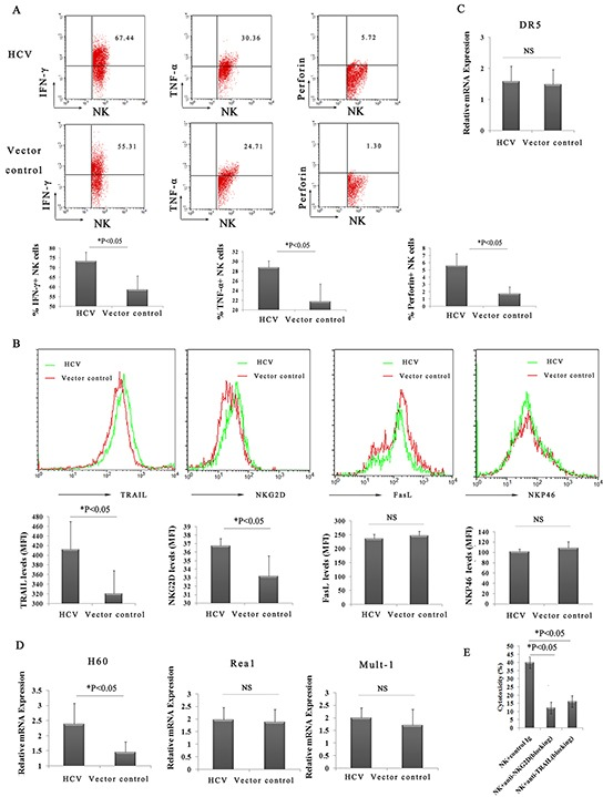 Highly activated hepatic NK cells and increased levels of cytokines act synergistically to amplify ConA-induced liver injury in HCV mice A . Enhanced production of IFN-γ, TNF-α and perforin from hepatic NK cells in HCV mice. Hepatic lymphocytes from p att B-HCV-Fluc-injected mice or p att B–Fluc-injected mice were prepared and examined by FACS using FITC-conjugated anti-NK1.1, PE-Cy TM 5-conjugated anti-CD3e, PE-conjugated anti-IFN-γ, PE-conjugated anti-TNF-α, and PE-conjugated anti-perforin. The percentage of hepatic NK cells secreting IFN-γ, TNF-α and perforin at 24 h after ConA treatment is shown. The results represent the mean ±SD of triplicate samples. *P