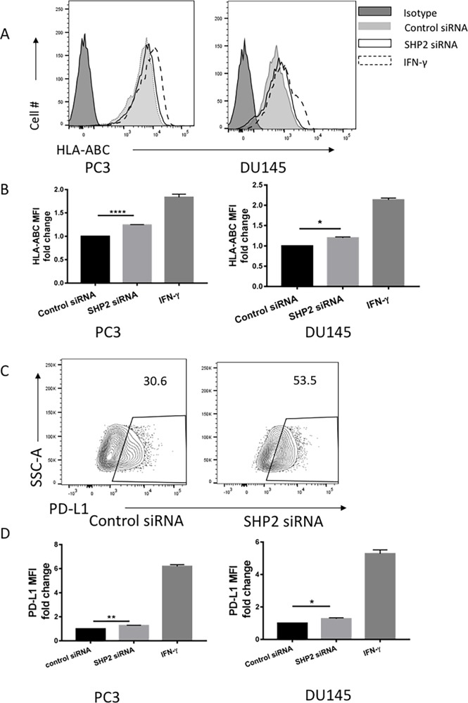 SHP2 depletion upregulated the expression of HLA-ABC and PD-L1 in PC3 and DU145 cells PC3 and DU145 cells were transfected with SHP2 siRNA (50 nmol/mL) for 48 hours. <t>IFN-γ</t> was used as a positive control to induce the expression of HLA-ABC and PD-L1. (A) A representative flow histogram of HLA-ABC is shown. (B) HLA-ABC MFI fold change of PC3 and DU145 after treatment with SHP2 siRNA or IFN-γ for 48 hours. Bar graph shows the MFI results represented as mean ±SE. (C) A representative flow histogram of PD-L1 of PC3 cells is shown. (D) PD-L1 MFI fold change of PC3 and DU145 after transfection of SHP2 siRNA or treatment with IFN-γ for 48 hours. Bar graphs represent mean ±SD from duplicate samples in three independent experiments. Full black line depicts isotype group. Full gray line depicts control siRNA group. Black line depicts SHP2 siRNA group. Dashed line depicts IFN- γ group.