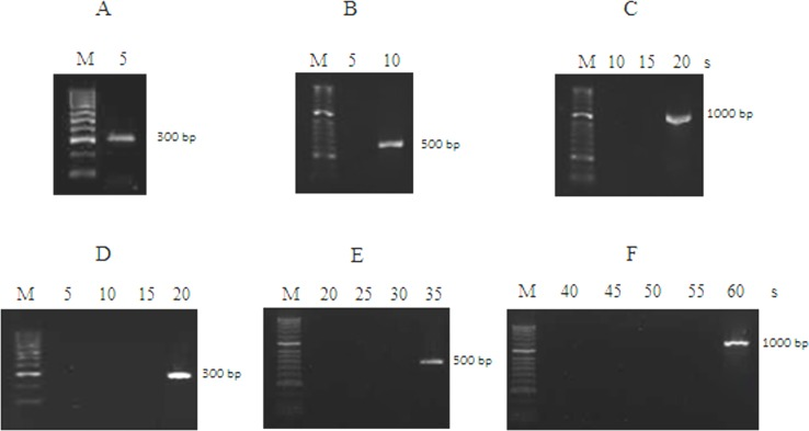 Evaluation of PCR amplification rate. Comparison of the PCR amplification rates of a fusion Neq SSB -TaqS DNA polymerase for 300 bp (A), 500 bp (B), 1000 bp (C) products and a Taq S DNA polymerase for 300 bp (D), 500 bp (E), 1000 bp (F) products. The elongation times used for the PCR amplification are indicated at the top. Lane M: the DNA molecular size marker (50–2000 bp).
