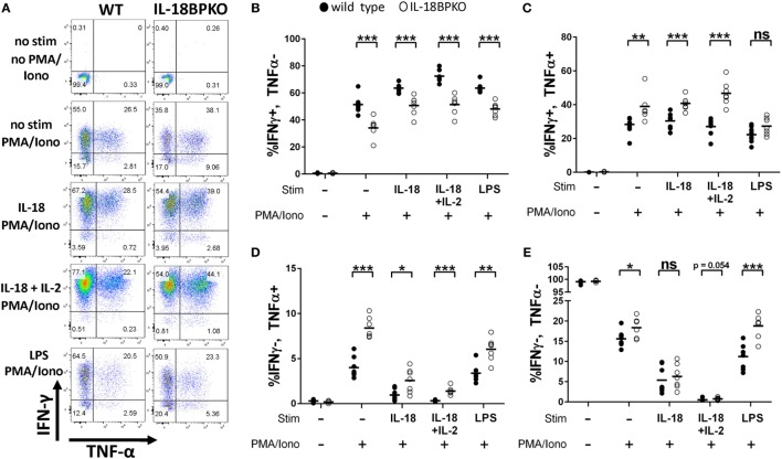 Natural killer (NK) cells from interleukin (IL)-18BPKO mice are polarized toward greater TNF-α production and reduced IFN-γ production. NK cells were stimulated for 24 h with either IL-18 (50 ng/mL), IL-18 (50 ng/mL) + IL-2 (2 ng/mL), or indirectly with LPS (500 ng/mL) and then treated with PMA and ionomycin (PMA/Iono) for 5 h prior to intracellular labeling of IFN-γ and TNF-α. (A) Representative gating for each treatment from wild-type (WT) and IL-18BPKO mice. (B) The proportion of IFN-γ + , TNF-α − NK cells was reduced among unstimulated and stimulated NK cells. (C,D) IFN-γ + , TNF-α + , and IFN-γ − , TNF-α + NK cells from IL-18BPKO mice were increased among unstimulated and stimulated NK cells. (E) IFN-γ − , TNF-α − NK cells were elevated among IL-18BPKO mice in unstimulated and LPS stimulated groups. Results from two unique experiments from eight WT and seven IL-18BPKO mice. Bars represent median. Significance calculated with Mann–Whitney U test. * p