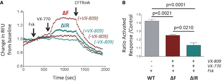 VX‐809 and VX‐770 partially rescue functional expression of ΔI1234_R1239‐CFTR in a HEK‐293 expression system Representative traces (membrane depolarization assay) of ΔI1234_R1239‐CFTR (ΔIR) and ΔF508‐CFTR (ΔF) function following chronic treatment with VX‐809 and acute activation (forskolin/VX‐770). Quantitation of relative activated responses of ΔI1234_R1239‐CFTR and ΔF508‐CFTR (mean ± SEM, n = 3 biological replicates). Activation of WT‐CFTR by forskolin (without added compound, n = 3, shown for comparison). Statistical significance tested using two‐way ANOVA with Tukey's multiple comparisons test.
