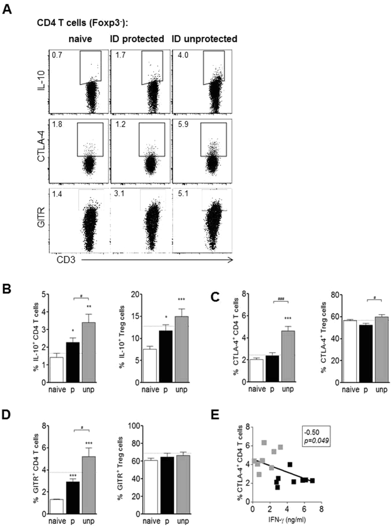 Unprotected mice have higher regulatory immune responses compared to protected mice. Hepatic CD4 T cells (gated Foxp3 − ) and Foxp3 + CD25 + Treg cells of protected and unprotected ID immunized mice were analyzed for regulatory marker expression at day 7 after challenge under artesunate treatment. (A) Representative FACS plots of Foxp3 − gated CD4 T cells for intracellular IL-10 expression after 36 h culture of hepatic leukocytes with CSP and sporozoites and addition of PMA/ionomycin plus <t>brefeldin</t> A in the last 4 h, and for surface expression of CTLA-4 or GITR ex vivo . Graphs show a summary of (B) intracellular IL-10 expression, (C) surface CTLA-4 and (D) GITR expression of Foxp3 − CD4 T cells and Treg cells from 2 experiments with 8–14 mice per group. The dotted line indicates the mean frequency for protected IV immunized mice (N = 9–16). Significant difference by Mann-Whitney test is indicated by *p