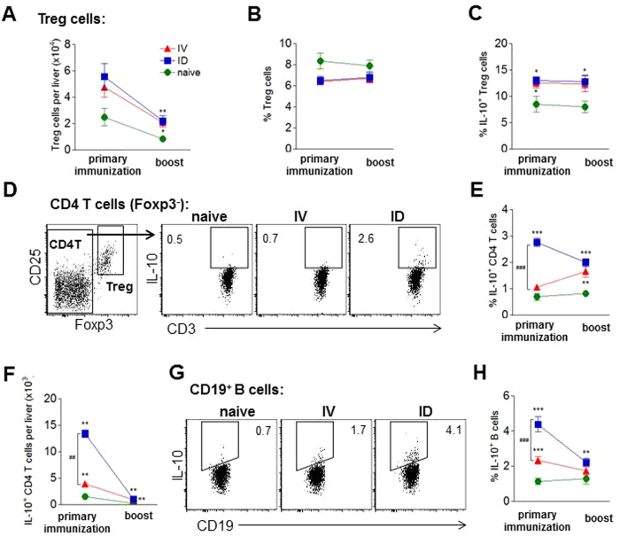 ID immunization induces stronger regulatory immune responses in liver compared to IV. Hepatic leukocytes were analyzed 7 days after IV or ID primary immunization or boost for regulatory marker expression by flow cytometry directly ex vivo ( A , B ) or after 36 h culture with CSP and sporozoites ( C – G ). (A) Number of Foxp3 + CD25 + Treg cells per liver. (B) Frequency of Treg cells within the CD4 + T cell population. (C) Intracellular IL-10 expression of Treg cells after addition of PMA, ionomycin and brefeldin A for 4 h to the culture. (D) Representative FACS plots of CD4 + Foxp3-negative T cells (CD4 T) in one IV or ID immunized and a naïve control mouse. (E,F) Summary of intracellular IL-10 expression of CD4 + Foxp3 − T cells after addition of PMA, ionomycin and brefeldin A expressed as frequencies ( E ) and cell number per liver ( F ). Representative FACS plots ( G ) and summary ( H ) of intracellular IL-10 expression in CD19 + gated B cells after addition of PMA, ionomycin and brefeldin A. Graphs show 1 representative out of 2 similar experiments ( C ) or a summary of 2 experiments with 8–10 mice per group. Significant difference by Mann-Whitney test is indicated by *p