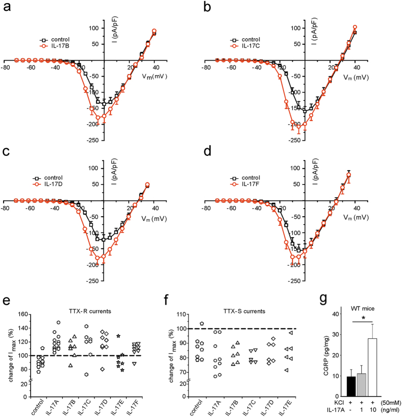 Effects of IL-17 family members on TTX-resistant and TTX-sensitive Na + currents in isolated and cultured DRG neurones and CGRP release in vitro from DRG neurones from naïve WT mice. ( a – d ) Changes of I max (peak current densities) in DRG neurones after bath application of IL-17B (n = 5) ( a ), IL-17C (n = 5) ( b ), IL-17D (n = 7) ( c ), and IL-17F (n = 7) ( d ). Only the neurones were included which showed increases of TTX-R currents, as indicated in ( e ). ( e ) I max of TTX-R currents of all neurones tested with IL-17 family members. No compound was applied to control neurones. ( f ) Changes of TTX-S Na + currents (I max ) in DRG neurones after bath application of IL-17 family members. No compound was applied to control neurones. ( g ) Release of CGRP from DRG neurones in vitro after cell culture for 48 h and depolarization with KCl and stimulation with IL-17A for 20 min (n = 5 per group). Illustrated CGRP concentrations show the evoked release minus the basal production in the same time in relation to total protein concentration of the DRG cell cultures. Although no significant differences in the release of CGRP between WT and IL-17KO were detectable, IL-17A (10 ng/ml) signalling increases CGRP release in WT DRG neurones (p = 0.045). *p