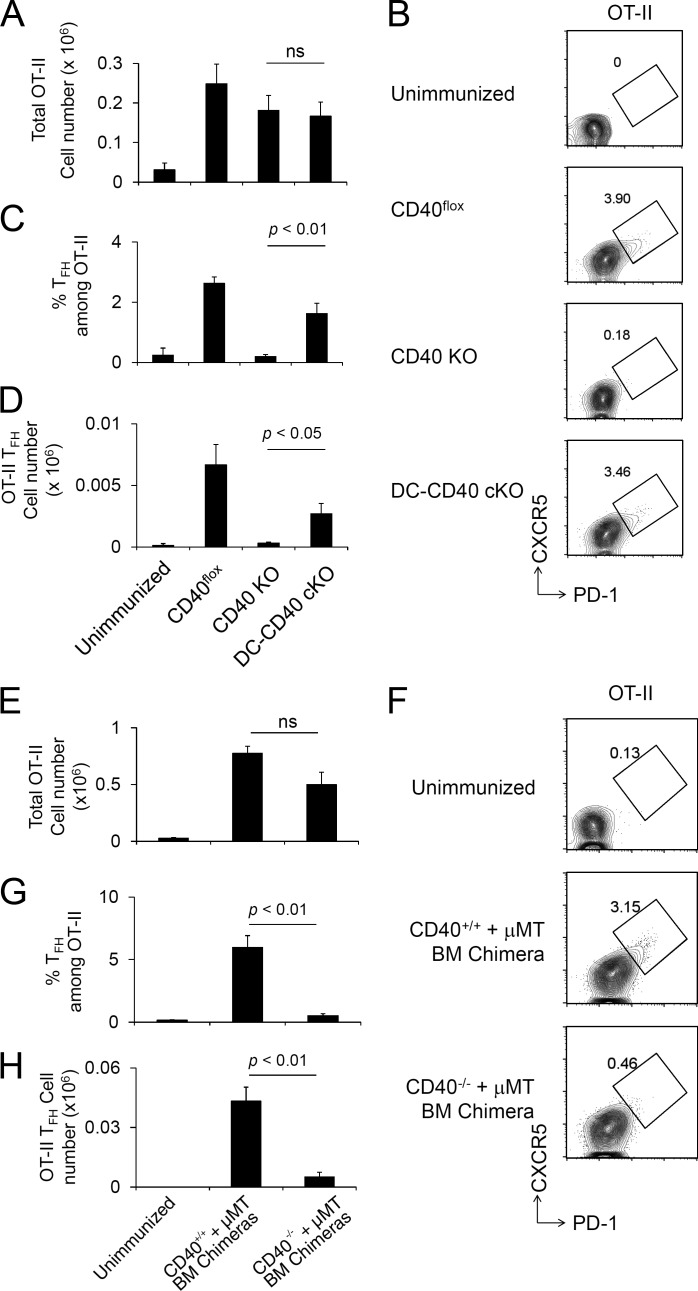 Antigen-specific T cell activation and Tfh cell development require CD40 on B cells but not DCs.  (A–D) Naive OT-II CD4 +  T cells were transferred to CD40 cKO mice followed by NP-OVA/Alum immunization 1 d later, and splenic OT-II cells were analyzed at day 8 after immunization. Recovered total OT-II cell number (A), FACS plot of OT-II (CD4 +  B220 −  CD45.1 +  Vα2 + ) cells analyzed for Tfh CXCR5 high  PD-1 high  phenotype (B), frequency of Tfh cells among OT-II (C), and total OT-II Tfh cell number were determined (D). Data are combined from three independent experiments. The total numbers of mice in the three combined experiments are CD40 flox ,  n  = 8; CD40 KO,  n  = 8; and DC-CD40 cKO,  n  = 11. ns, not significant. (E–H) A mixture of BM from B cell KO and CD40 KO donors was used to reconstitute irradiated B cell KO host mice, generating chimeras in which all B cells were constitutively CD40 deficient (CD40 −/−  + µMT). Control chimeras received a mixture of BM from B cell KO and WT donors (CD40 +/+  + µMT). OT-II T cells were transferred to recipient BM chimera mice (CD45.2) followed by NP-OVA/Alum immunization 1 d later, and splenic OT-II cells were analyzed at day 8 after immunization. Recovered OT-II cell number (E), FACS plot of OT-II (CD4 +  CD45.1 +  Vα2 + ) cells analyzed for the Tfh CXCR5 high PD-1 high  phenotype (F), frequency of OT-II Tfh cells among total CD4 +  T cells (G), and the number of Tfh phenotype OT-II cells were analyzed (H). Data presented are the combined result of three independent experiments. The total numbers of mice in the three combined experiments are unimmunized,  n  = 3; (CD40 +/+  + µMT) BM chimera,  n  = 3; and (CD40 −/−  + μMT) BM chimera,  n  = 5. Statistical significance was determined by Student's  t  test. All error bars represent means ± SEM.