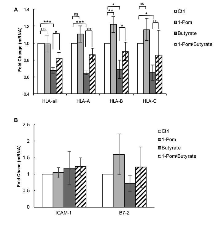 Effect of Pom on MHC-I (HLA-A, B and C), ICAM and B7-2 mRNA gene expression in BCBL-1 cells induced with butyrate BCBL-1 cells were treated with control (DMSO) or Pom (1 μM) for 24 h followed by treatment with PBS or butyrate for an additional 24 h. Total mRNA was isolated and analyzed for expression levels by real time QT-PCR and was normalized to 18S levels. Shown are the fold changes in mRNA expression for total A . HLA and HLA A, B and C alleles following treatment and B . <t>ICAM-1</t> and B7-2. Values are the average +/- standard deviation of four independent experiments. *** P