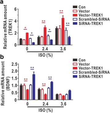 Regulation of astrocytic TREK-1 influenced the expression of BDNF in cultured astrocytes after isoflurane exposure. The TREK-1 ( a , N = 5) and BDNF ( b , N = 5) mRNA levels were analysed by qRT-PCR in TREK-1 overexpression and knock-down models. a and b were treated with different doses of isoflurane (0%, 2.4%, and 3.6%) for 9 h. ISO, isoflurane. Data are presented as relative to the values of 0% isoflurane in Con group. The data are presented as the mean ± SEM. * P
