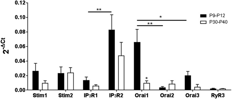 Expression of Orai/Stim transcripts in the mouse optic nerve. qRT-PCR was performed on lysates of acutely isolated optic nerves from WT postnatal mice (aged P9–P12) and adult mice (P30–P40). Data are from ten pooled optic nerves in each age group, run in triplicate, expressed as relative mRNA levels (2 -ΔCt ) compared to the housekeeping gene GAPDH (mean ± SEM, n = 3). Orai1 was the most highly expressed Orai isoform in the postnatal nerve (* p