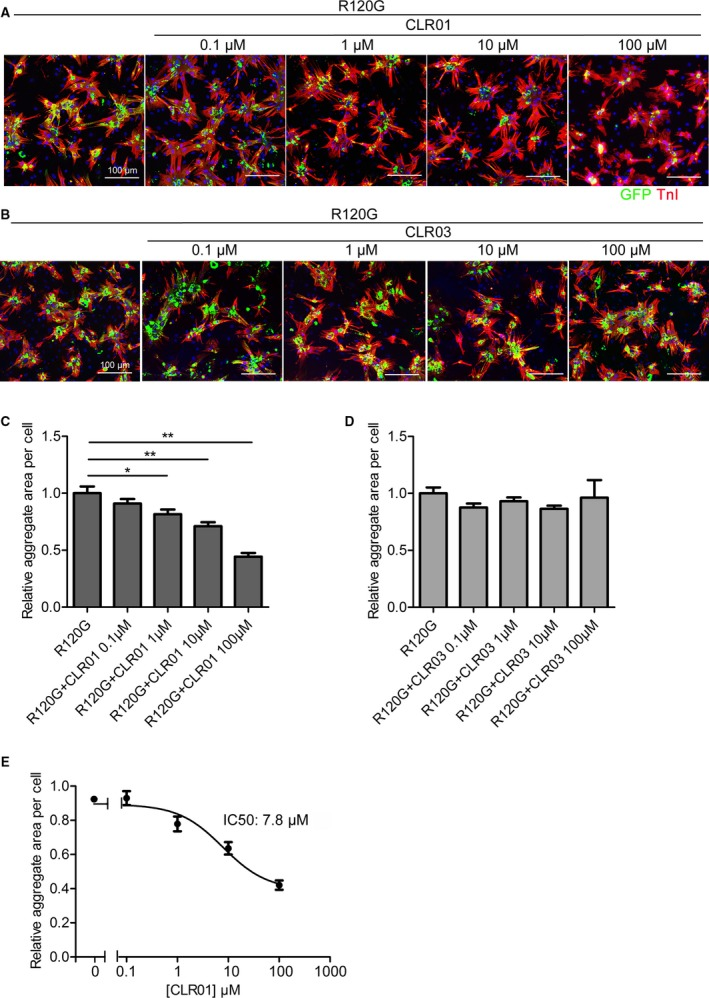 CLR 01 inhibits R120G‐induced protein aggregation in a dose‐dependent manner. Neonatal rat ventricular cardiomyocytes were infected with Ad GFP ‐Cry AB R 120G and treated with different doses of CLR 01 or CLR 03. A and B, NRVM s were fixed and immunostained with troponin I (TnI; red) and 4',6‐diamidino‐2‐phenylindole ( DAPI , nuclear staining; blue). C and D, Aggregates (green) in the neonatal rat ventricular cardiomyocytes were <t>quantitated</t> using <t>NIS</t> ‐elements (Nikon) software. E, Dose‐response curve for CLR 01 inhibition of R120G‐induced protein aggregation. At least 100 cells were quantitated in each group for each experiment, and each group was replicated n=6. The IC 50 value is indicated. R120G indicates Ad GFP ‐Cry AB R 120G . * P