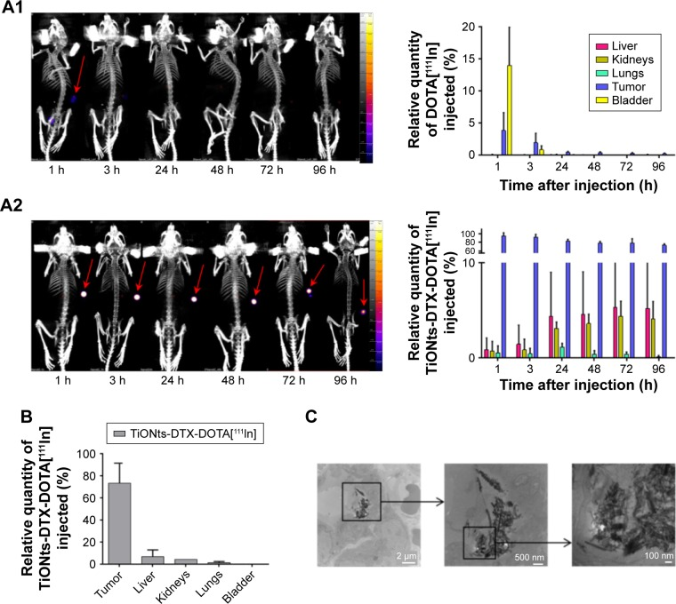 TiONts-DTX biodistribution analysis. Notes: ( A ) SPECT-CT imaging of kinetics and biodistribution analysis for each organ (expressed as a percentage of injected 111 In activity, taking into account the decrease in 111 In activity after the injection of DOTA[ 111 In] ( A 1) or TiONts-DTX-DOTA[ 111 In] ( A 2)). ( B ) TiONts-DTX-DOTA[ 111 In] biodistribution in dissected organs by radioactivity detection using gamma counting 7 days after injection (mean value ± SD). ( C ) TEM images showing the intracellular location of TiONts-DTX 24 h after injection into PC-3 tumors. Abbreviations: DTX, docetaxel; SPECT-CT, single-photon emission computed tomography-computed tomography; TEM, transmission electron microscopy; TiONts, titanate nanotubes.