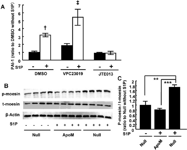S1P bound to albumin induced PAI-1 expression by activating S1PR2 pathway in 3T3L1 adipocytes. (A) 3T3L1 adipocytes were pre-incubated for 18 hours in FBS-free DMEM and the medium was exchanged for FBS-free DMEM containing 20 µM of VPC23019, JTE013, or DMSO for 30 minutes. Then, the cells were challenged with a medium containing 10 µM of sphingosine 1-phosphate (S1P) with the corresponding inhibitors for 4 hours. The mRNA level of plasminogen activator inhibitor 1 (PAI-1) was analyzed using real-time PCR. 18S was utilized as an internal control ( n = 4–6/group). † p