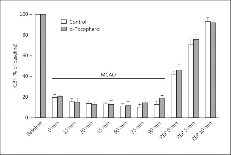 rCBF in control ischemic rats received vehicle (n = 8) and ischemic rats received <t>α-tocopherol</t> at a dose of 30 mg/kg (n = 8) before MCAO, during MCAO and during reperfusion times.