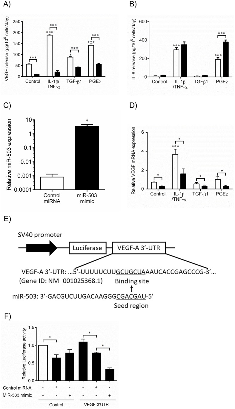 MiR-503 inhibits VEGF protein release and mRNA expression of human lung fibroblasts by direct binding to the 3' untranslated region (UTR) of VEGF mRNA. (A-D) Primary human fetal lung fibroblasts (HFL-1 cells) cultured in monolayer were transfected with miR-503 mimic (Black bar) or control miRNA (White bar) transfection reagent, as described in Materials and Methods. 24hr after transfection, the medium was changed to DMEM containing 0.2% FCS, with or without IL-1ß and TNF-α (1 ng/ml), TGF-ß1 (1 ng/ml), or PGE 2 (1 x 10 −7 M). (A, B) 3 days after transfection, the culture medium was harvested and assayed for (A) VEGF or (B) IL-8 (with or without IL-1ß and TNF-α) by ELISA. (A) Vertical axis: VEGF release (pg per 10 5 cells per 2 days). (B) Vertical axis: IL-8 release (pg per 10 5 cells per 2 days). Horizontal axis: culture condition. (C) 1 day after transfection, RNA was isolated and endogenous miR-503 expression was analyzed in the presence of control miRNA or miR-503 mimic by real-time qPCR. Vertical axis: level of miR503 expression, expressed as fold of 18s-rRNA values. (D) 2 days after transfection, RNA was isolated and assayed for VEGF mRNA by real-time qPCR. Vertical axis: level of VEGF mRNA expression, expressed as fold of 18s-rRNA values. Horizontal axis: culture conditions. * p