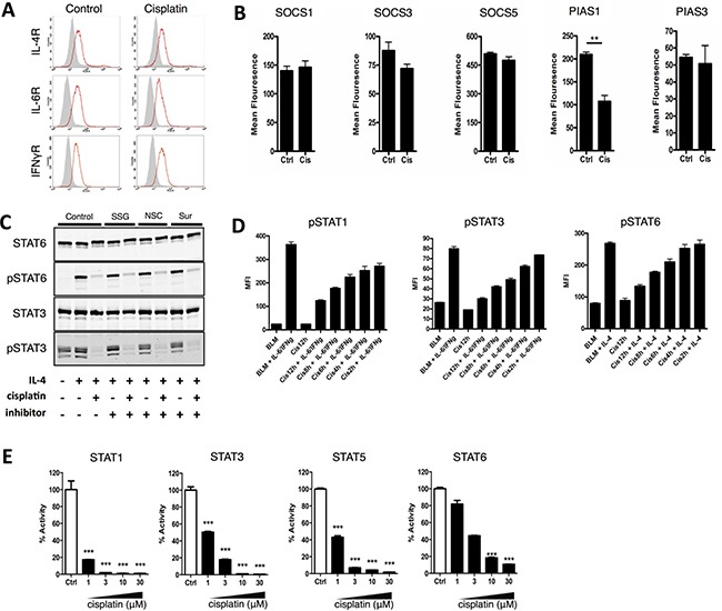 Cisplatin prevents STAT phosphorylation by binding to STAT proteins and blocking the SH2 domain ( A ) DU-145 cells were cultured with and without co-administration of cisplatin (10 μg/ml) for 24 hours and the cell surface expression of the IL-4, IFNγ and IL-6 receptor was determined by flow cytometry. Shown is one representative experiment out of two independent experiments. ( B ) DU-145 cells were cultured with and without co-administration of cisplatin (10 μg/ml) for 24 hours and the expression of SOCS1, SOCS2, SOCS3, PIAS1 and PIAS3 was determined by flow cytometry. Shown is one representative experiment performed in triplicate (+SEM) out of 2 independent experiments. ( C ) DU-145 cells cultured with IL-4 and with and without simultaneous co-administration of cisplatin (10 μg/ml) cisplatin in the presence of Sodium Stibogluconate (50 μg/ml), NSC87887 (50 μM) or Suramin (100 μg/ml). Phosphorylation of STAT6, 3 and 1 was analyzed by western blot. Shown is one representative experiment out of two independent experiments. ( D ) BLM cells were treated with cisplatin (20 μg/ml) for the indicated times after which the cells were stimulated with IL-6 and IFNγ (STAT1 and STAT3) or IL-4 (STAT6) for 30 minutes. STAT phosphorylation was measured by flow cytometry. Shown is the mean ± SEM of the mean fluorescence of one representative experiment out of at least 2 independent flow cytometry experiments performed in triplicate. ( E ) Binding of pTyr peptide to STAT SH2 domain visualized by normalized energy transfer between donor bead-coupled STATs and acceptor bead-coupled pTyr peptide (alpha screen). STATs were preincubated with increasing concentration of cisplatin (1, 3, 10 or 30 μM). Shown is the mean ± SEM of one representative experiment performed in triplicate out of 3 independent experiments.