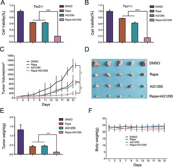 The combination of rapamycin and AG1295 more effectively suppresses the growth of cells lacking TSC1/TSC2 complex in vitro and in vivo than either agent alone ( A , B ) Tsc2−/− (A) or Tsc1−/− MEFs (B) were treated with a combination of 5 nM rapamycin (Rapa) and 20 μM AG1295 or either agent alone for 48 h. Cell viability was examined with an MTT assay. ( C – F ) NTC/T2-null cells were inoculated subcutaneously into the nude mice to evaluate the effects of rapamycin and AG1295 in vivo . (C) Tumor volume growth curves. (D) Dissected tumors. (E) Tumor weight. (F) Body weights of mice. ** P