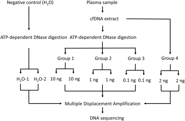 Study design to characterize eccDNAs in human plasma. cfDNAs from three plasma samples were divided into four groups. Groups 1, 2 and 3 were subjected to the ATP-dependent DNase digestion and MDA procedures while Group 4 went directly to the MDA procedure. Each group has a technical replicate. Water was used as a negative control. A total of 26 libraries were prepared for DNA sequencing. Another four libraries from one additional plasma cfDNA sample were sequenced as a validation.