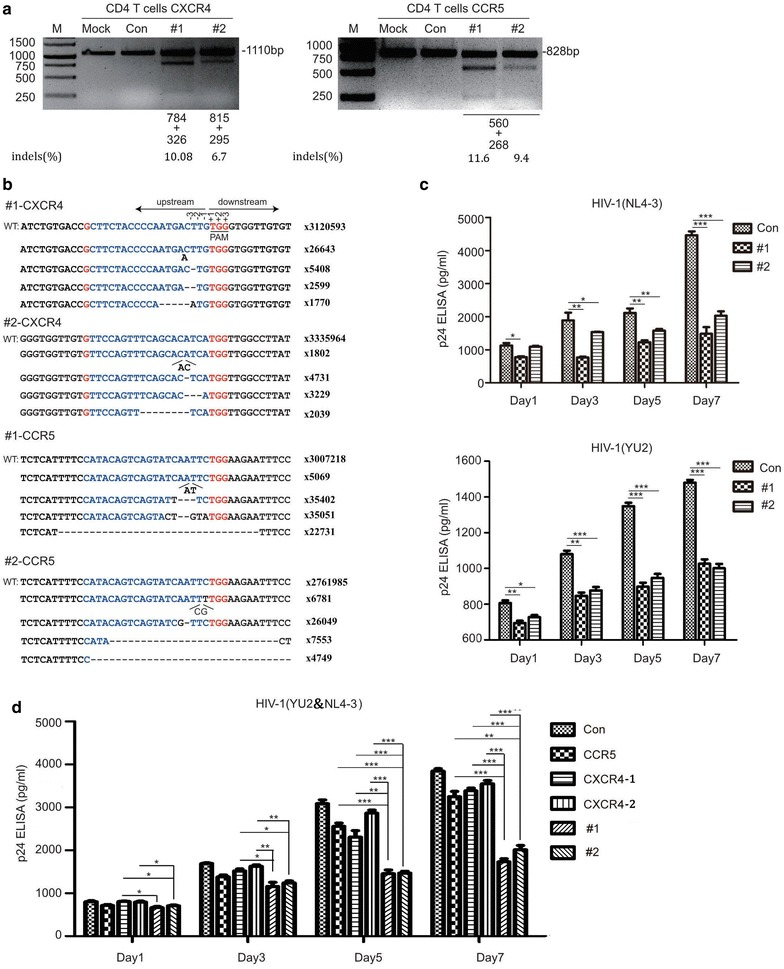 lenti-X4R5-Cas9 modified primary CD4 + T cell resists HIV challenge. a T7E1 analysis of CXCR4 and CCR5 disruption. b Deep sequencing analysis of typical NHEJ (indels) of related targets. c lenti-X4R5-Cas9 modified CD4 + T cell challenged with HIV-1 NL4-3 or HIV-1 YU-2 . d lenti-X4R5-Cas9 modified CD4 + T cell exposed to dual-tropic HIV-1 variants (NL4-3 YU-2, 1:1). The CCR5, CXCR4-1, CXCR4-2 represent single disruption of CCR5 or CXCR4, which use the same corresponding gRNAs used in lenti-X4R5-Cas9-#1 or #2. The data shown were the mean ± SD of three independent experiments. *P
