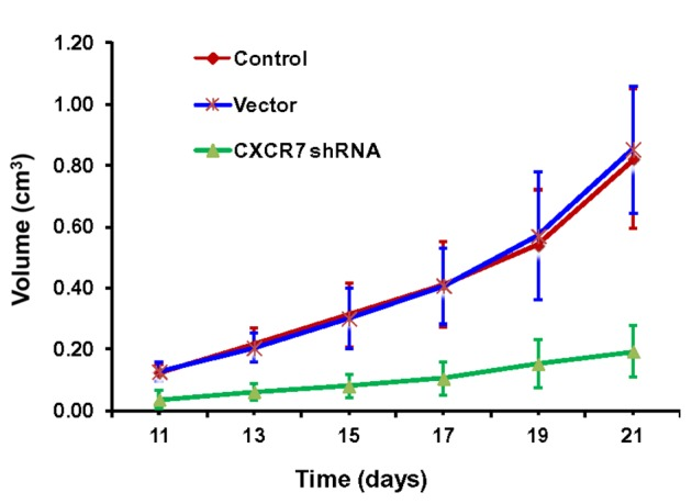 Progression of transplanted tumor volume with time in mice. Comparisons between control, vector and CXCR7 <t>shRNA</t> treatments. The tumor sizes increased daily over time following transplantation in the control and vector mice. However, the tumor volumes were smaller in CXCR7 shRNA mice compared with those in the control and vector mice from day 11 to day 21 post-implantation. There was not difference in tumor size between the control and vector groups. CXCR7, C-X-C chemokine receptor type 7; shRNA, small hairpin <t>RNA.</t>