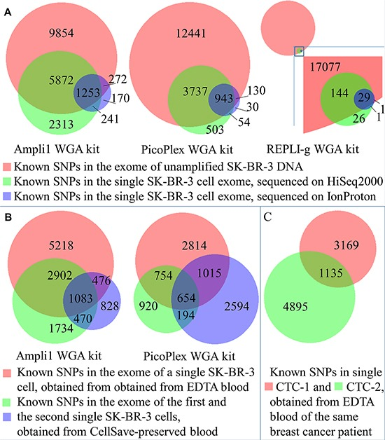 Distribution of identified known SNPs between datasets ( A ) Known SNPs identified in single cells, amplified with Ampli1, PicoPlex, and REPLI-g WGA kits and obtained from EDTA-preserved blood in comparison to unamplified DNA. ( B ) Known SNPs identified in single cells, amplified with Ampli1 or PicoPlex and obtained from EDTA- and CellSave-preserved blood in comparison to unamplified DNA from unfixed cells. ( C ) Known SNPs identified in single CTCs, amplified with PicoPlex in comparison to each other.