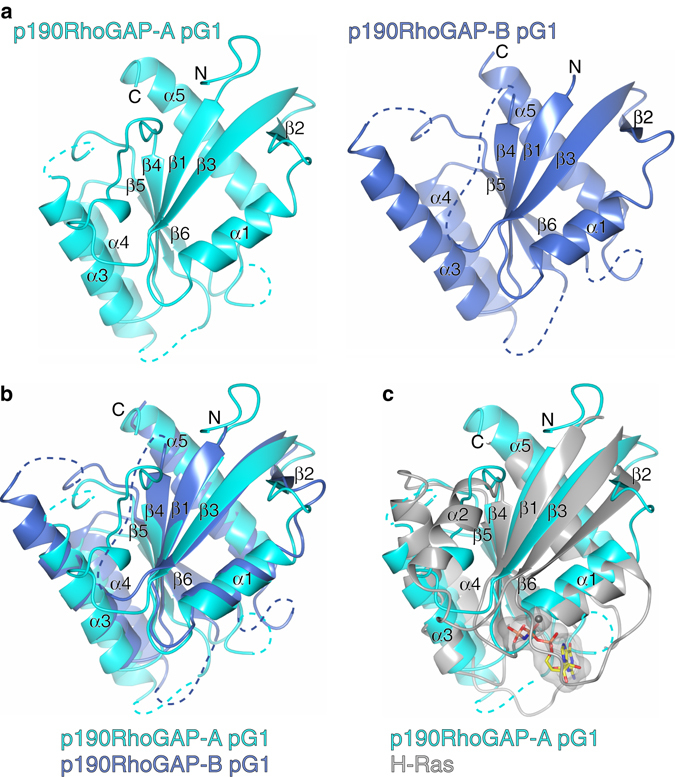 Structural analysis of p190RhoGAP pseudoGTPase domain <t>pG1.</t> a Crystal structures of pG1 for p190RhoGAP-A ( left , cyan ) and p190RhoGAP-B ( right , blue ). Secondary structure and N and C termini are labeled. Unmodeled loops are indicated by a dashed line . b Superposition of p190RhoGAP-A and -B pG1 domains. c Superposition of p190RhoGAP-A pG1 domain with GTP-analog bound H-Ras in gray ; PDB ID: 5P21 56