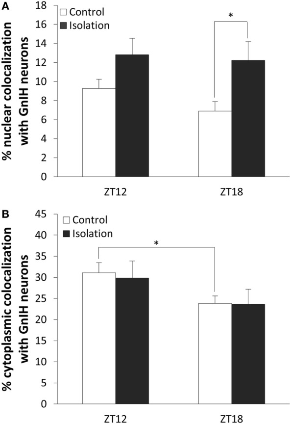 The effect of postweaning social isolation on β-catenin colocalization with gonadotropin-inhibitory hormone (GnIH) neurons in the dorsomedial hypothalamus region. (A) Comparison of β-catenin nuclear colocalization within GnIH neurons of the control and isolated rats at ZT12 and ZT18 (control: n = 6 and isolation: n = 6 for ZT12 and control: n = 9 and isolation: n = 9 for ZT18). (B) Comparison of β-catenin cytoplasmic colocalization in GnIH neurons of control and isolated rats in ZT12 and ZT18 (control: n = 6 and isolation: n = 6 for ZT12 and control: n = 9 and isolation: n = 9 for ZT18). Data are presented as means ± SEM for each set. Significance was set at p