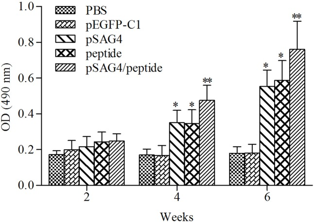 Measurement of specific IgG antibodies in immunized sera of mice. Twenty blood samples of each group were collected from caudal vein on days 13, 27, and 41. Results are expressed as means of the OD490 of the samples. T. gondii -specific IgG was used in the study. All the samples were run three times. ∗ Compared with PBS or pEGFP-C1, p